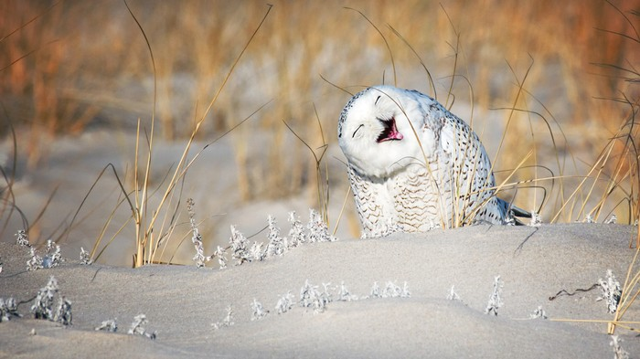 Who Is Arguing About Bernie and Hillary? Certainly Not This Playful Owl