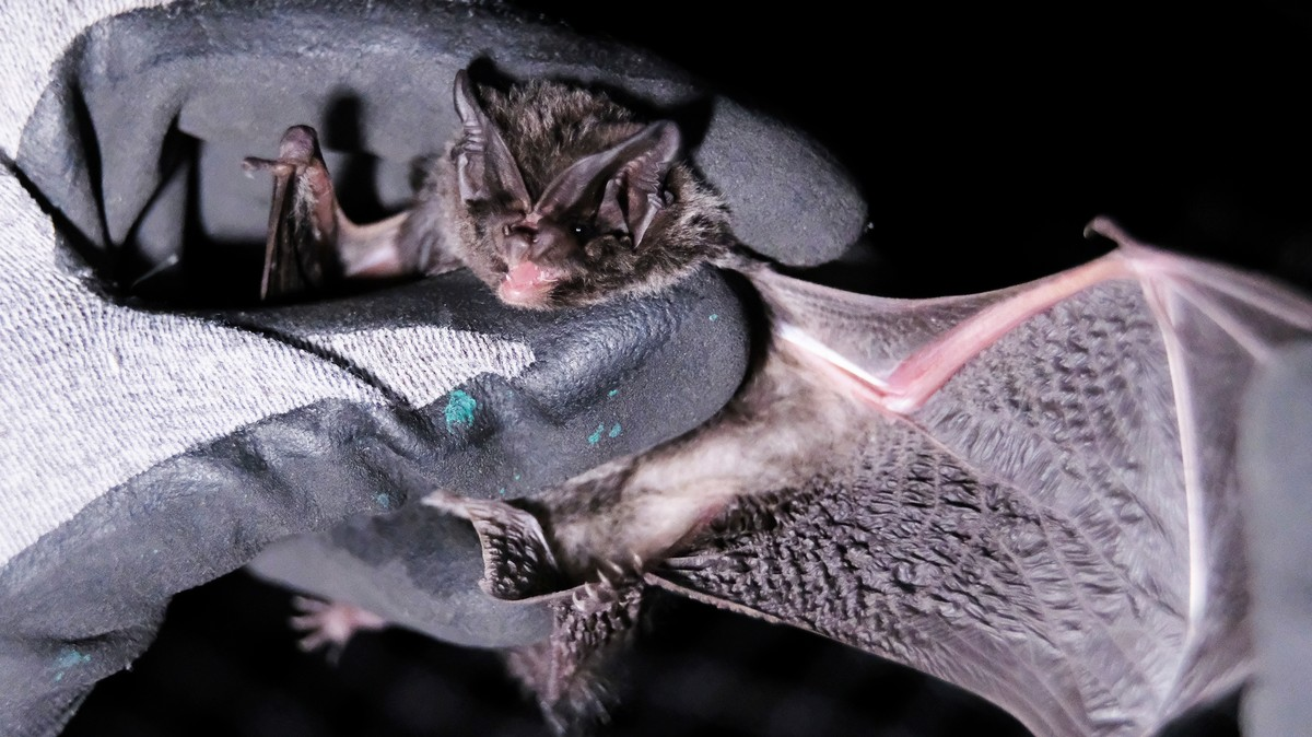 , Scientists Now Think They Know What Started China's Deadly Coronavirus: Bats, Saubio Making Wealth