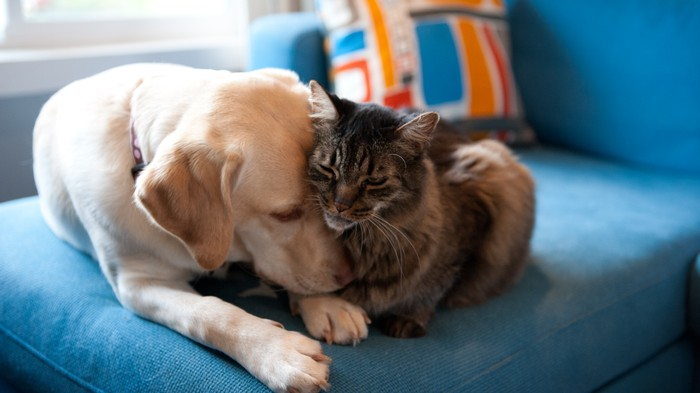 Scientists Found Harmful 'Forever Chemicals' in Pet Cats and Dogs