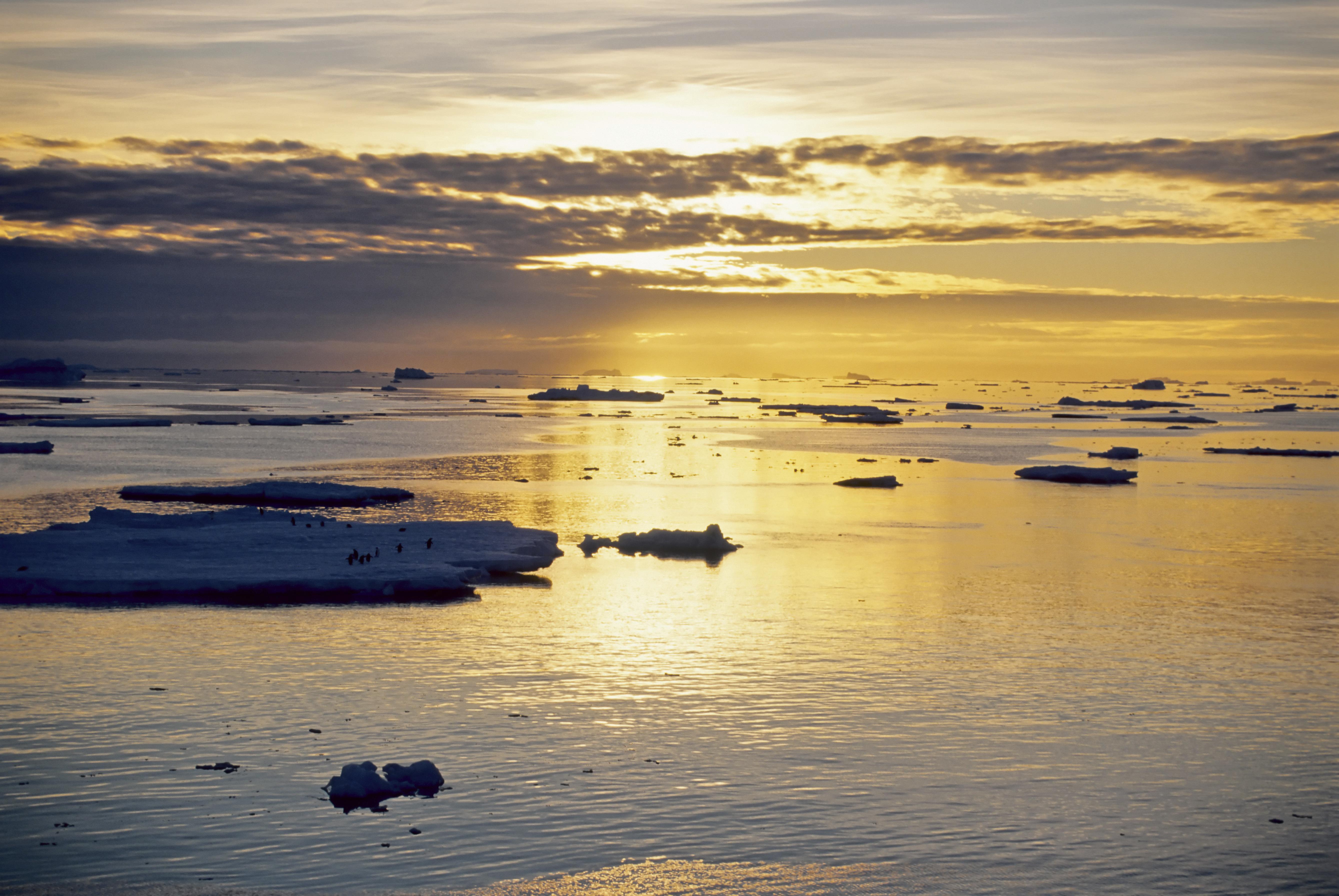 , Good Morning. It's 65 Degrees in Antarctica., Saubio Making Wealth