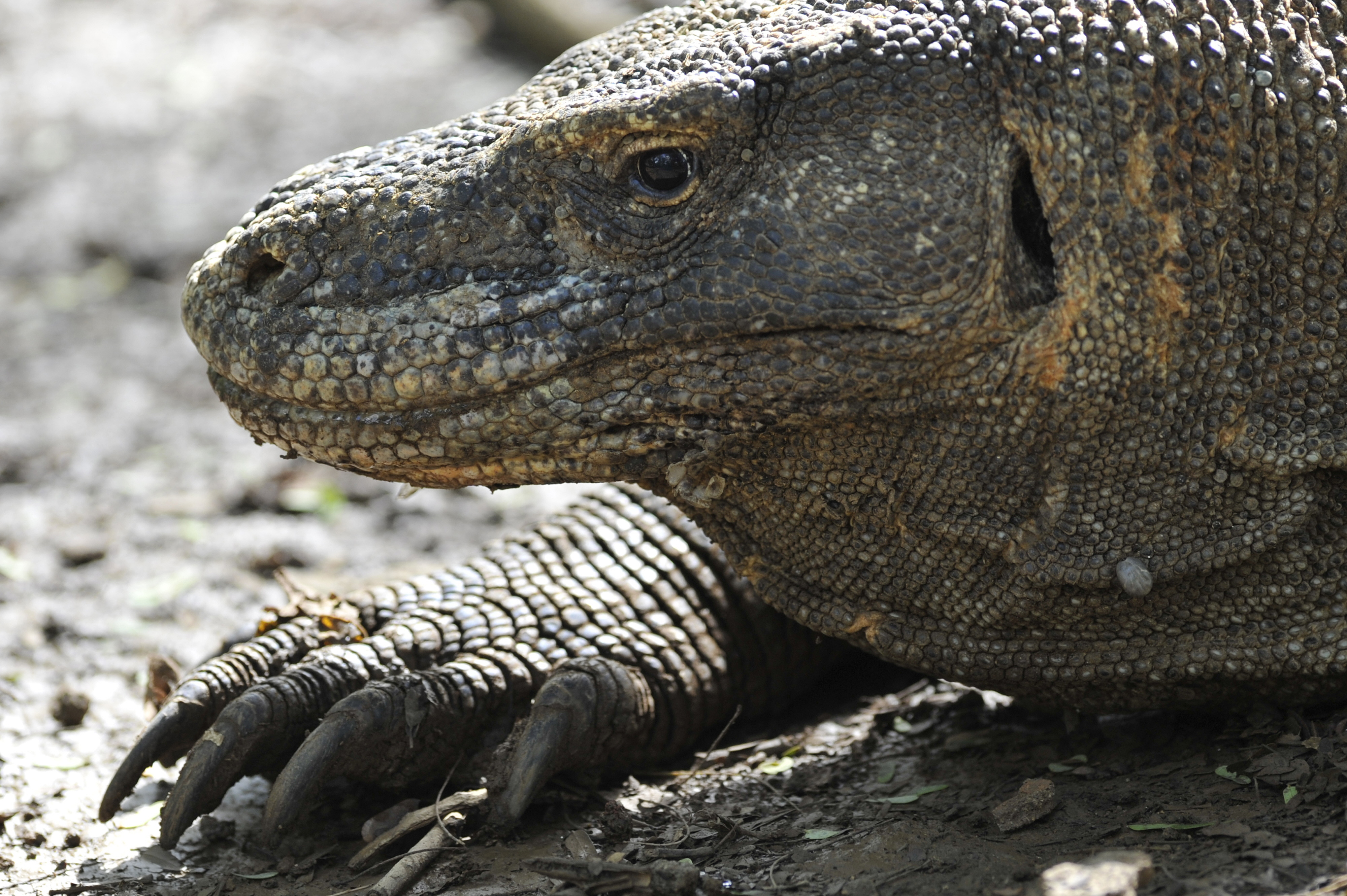 Indonesia Merencanakan Atraksi Bergaya 'Jurassic Park ...