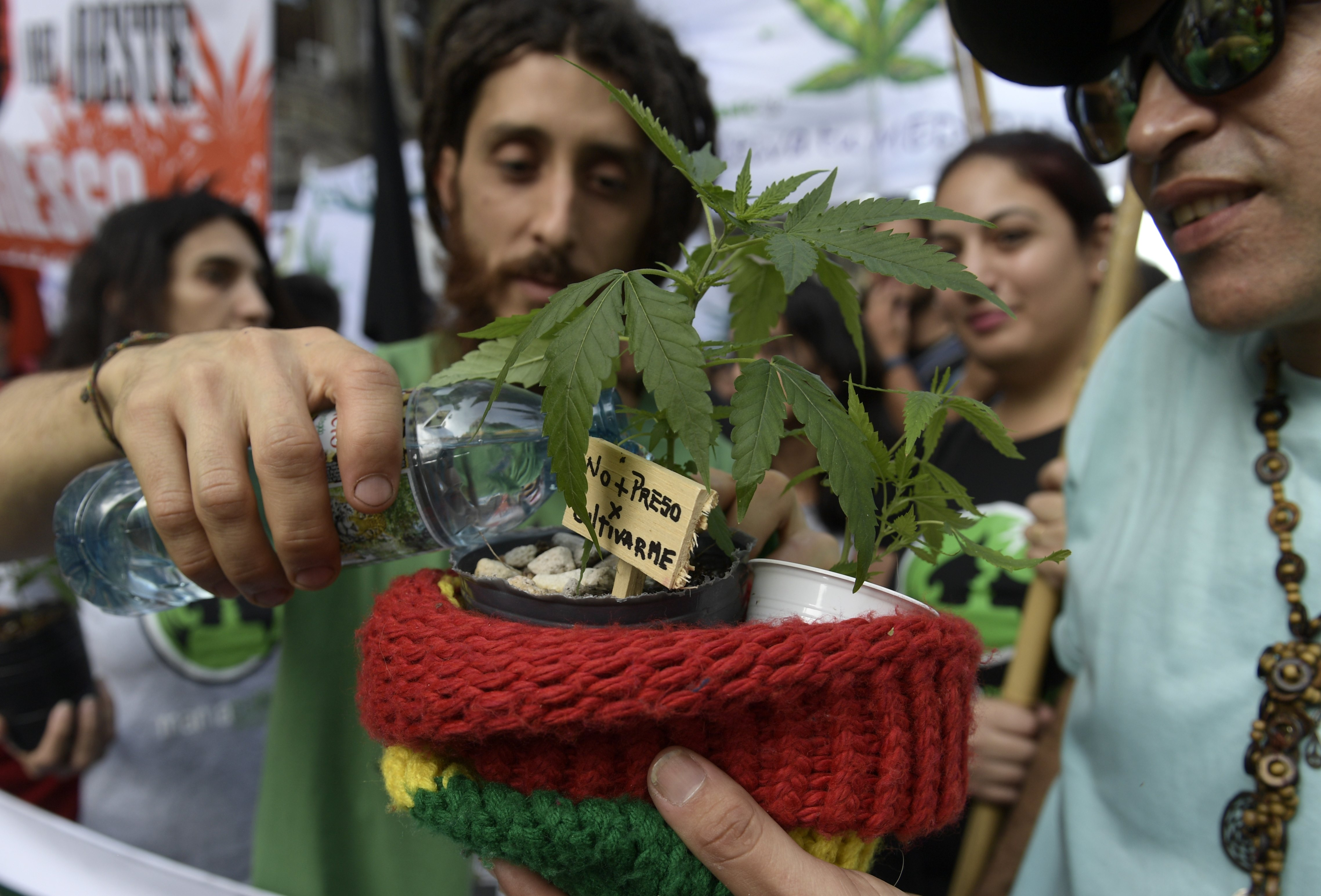 post-image-Free Medical Marijuana Will Be Available to the Uninsured in Argentina