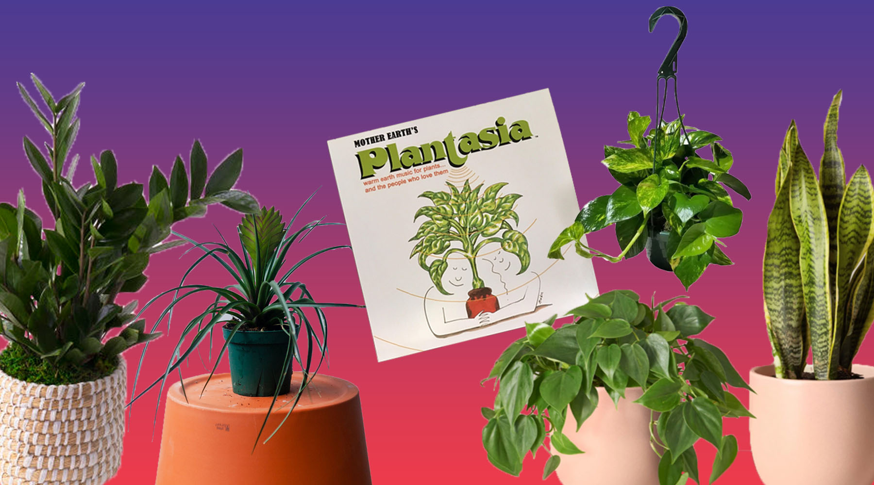 The Best Plants for People Who Always Complain About Their Plants Dying thumbnail