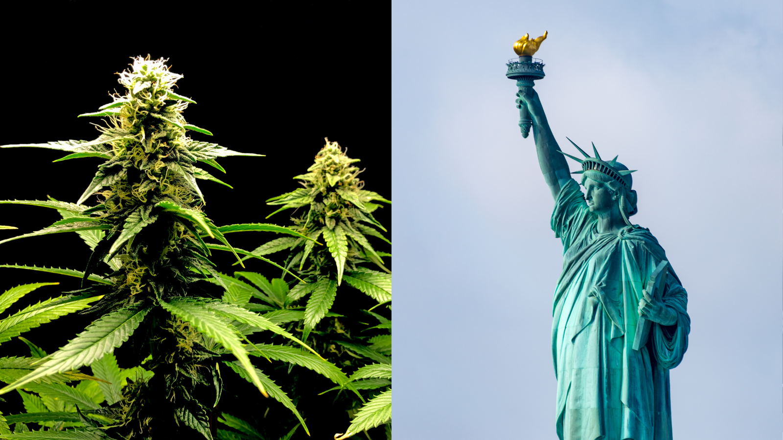 post-image-New York Just Passed Legal Weed. Now What?