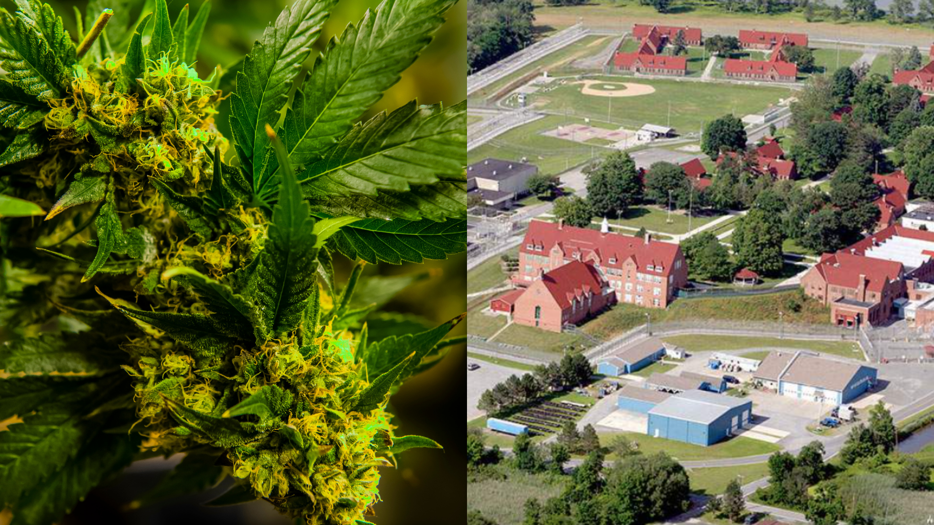 post-image-Big Weed Is Taking Over This Abandoned Prison in New York