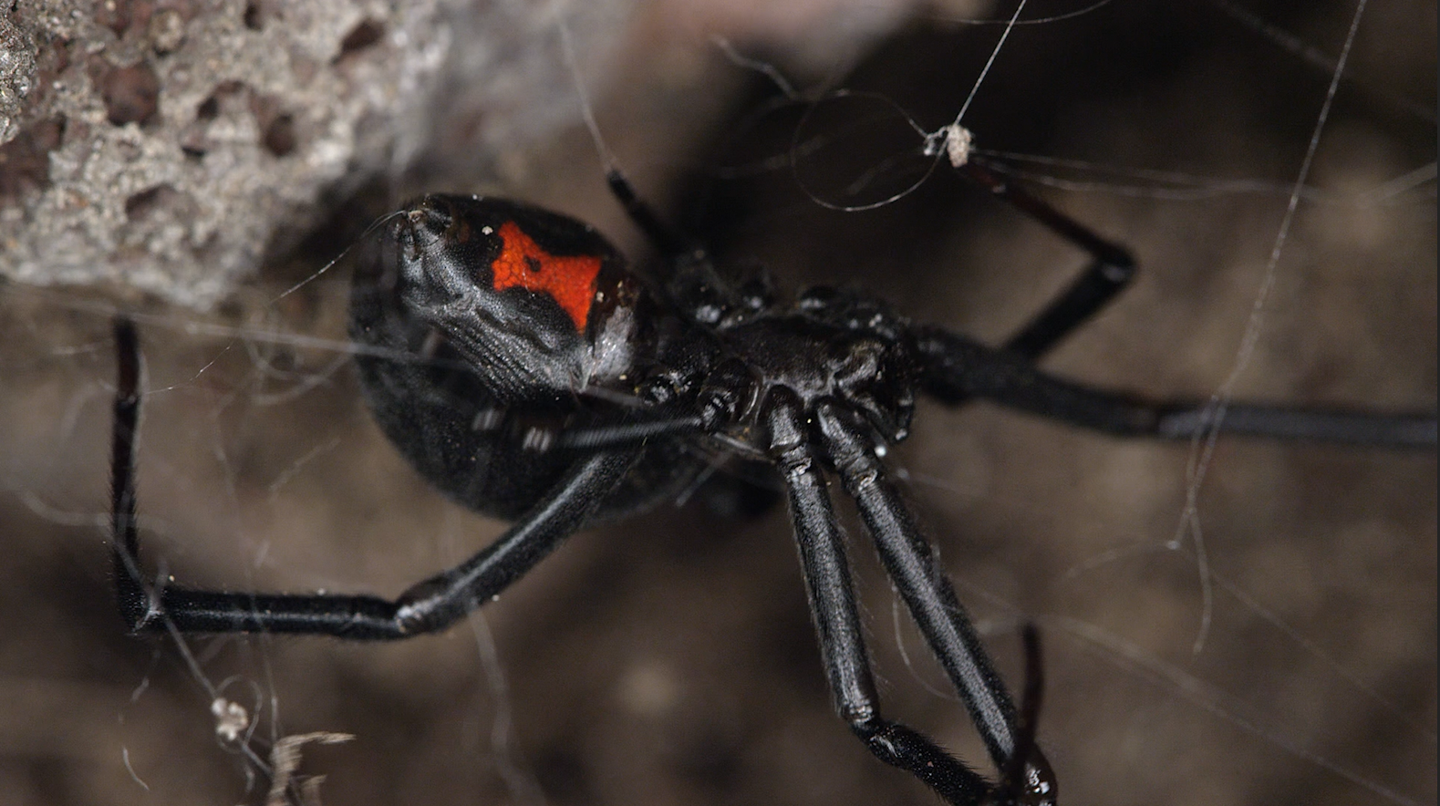 Spider Silk Could Save the World - vice