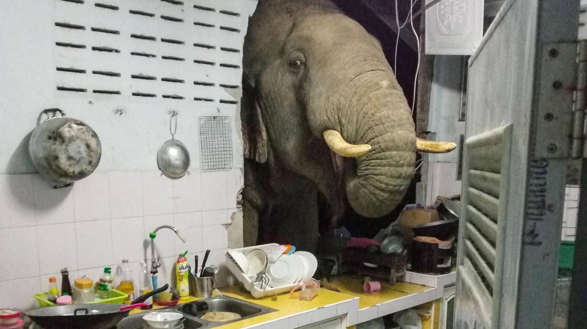 Bayangkan Dapurmu Tengah Malam Dijebol Gajah, Itu yang Dialami Keluarga di Thailand