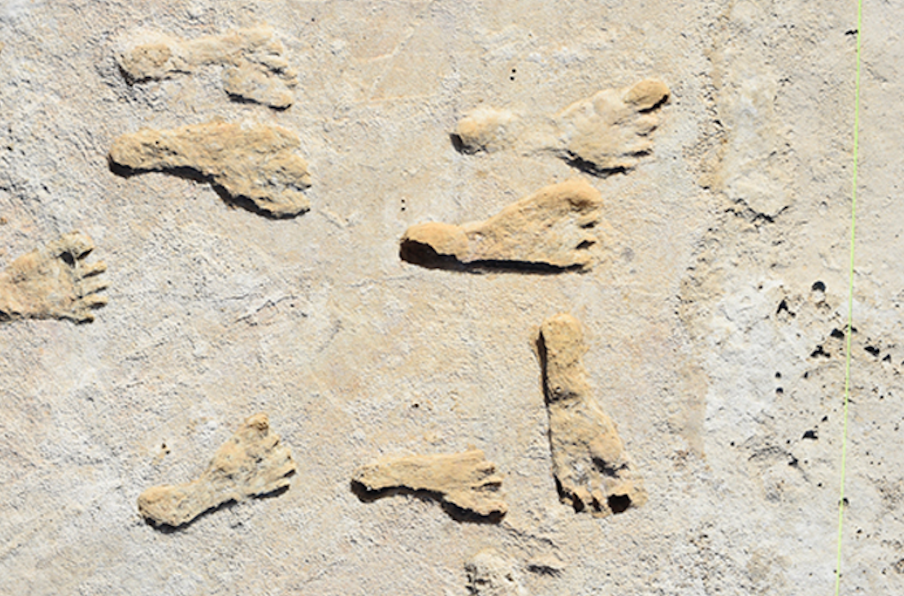 Scientists Identify Oldest Human Footprints in North America In Major Find thumbnail