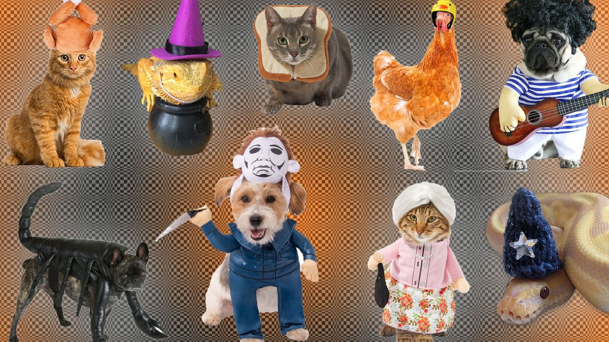 The Best Pet Halloween Costumes, From Cute to Weird to Terrifying