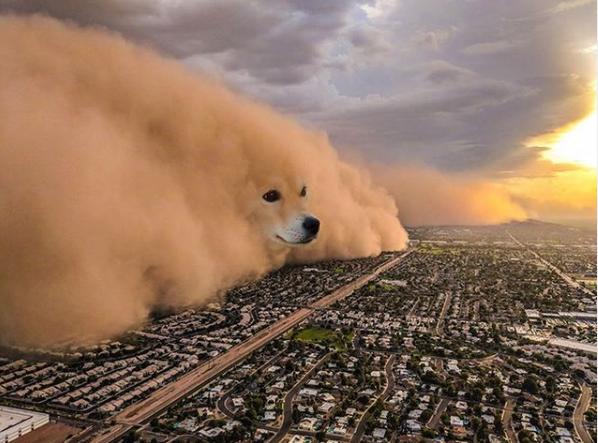 corgi smoke cloud