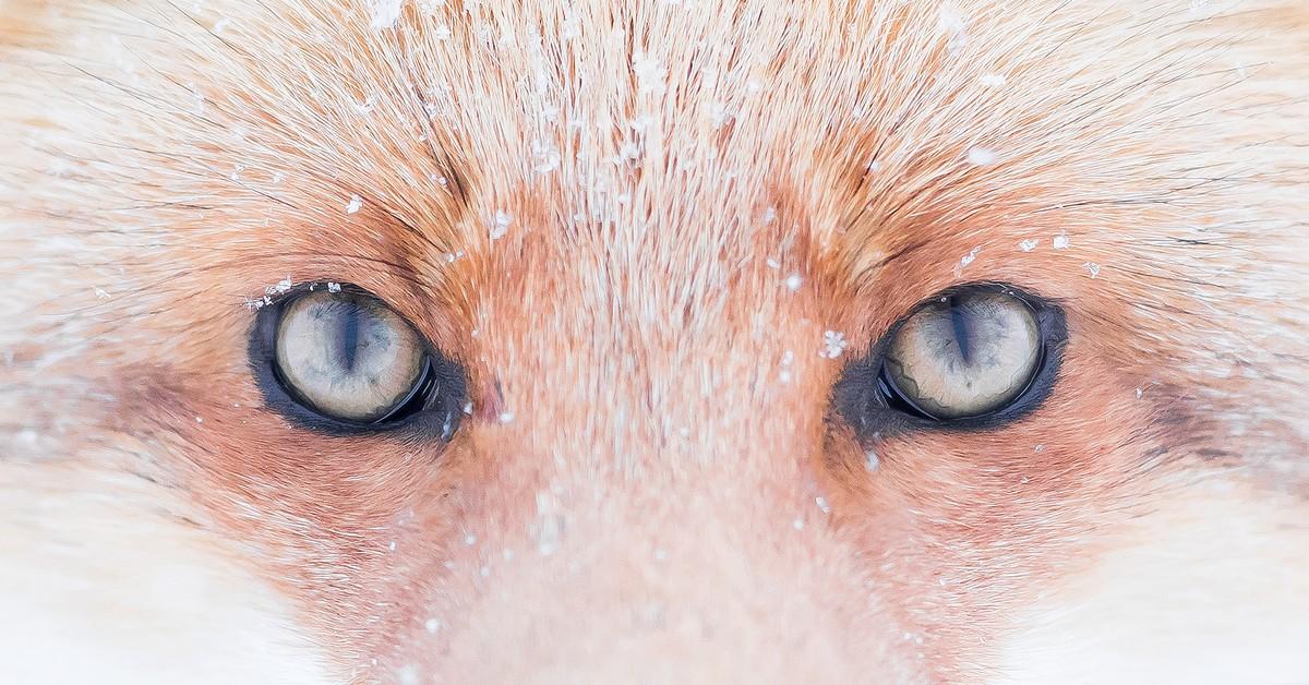 Das aufregende und gleichzeitig einsame Leben eines Wildtierfotografen