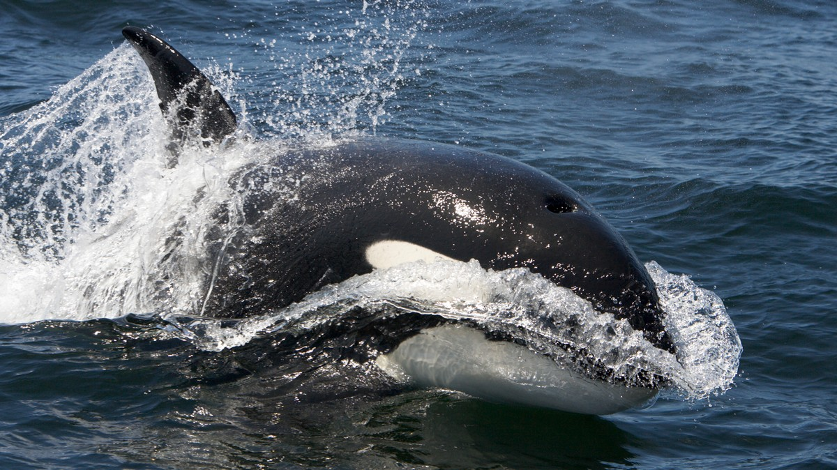 Trump Wants to Take Water Away from Whales and Endangered Fish and Give It to Wealthy California Farmers