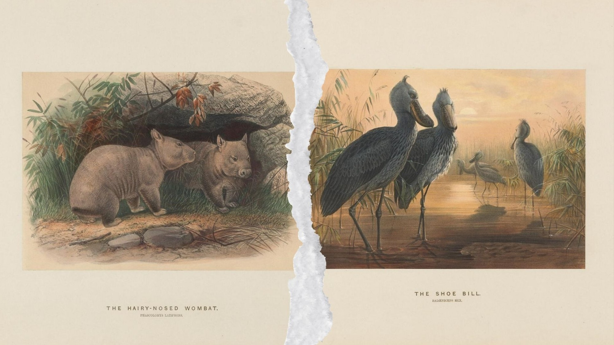 150K Nature Illustrations Spanning Hundreds of Years Are Now Free Online