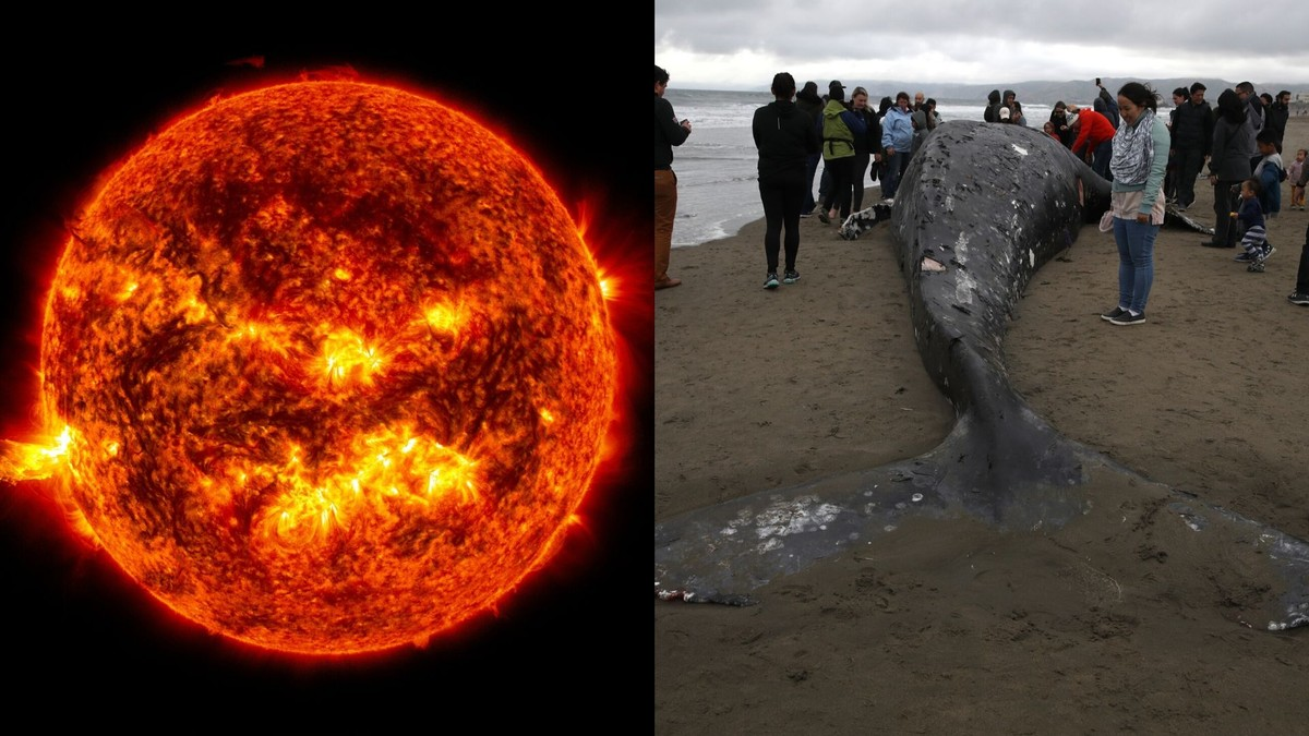 The Sun is Mysteriously Causing Whales to Strand and Die, Research Suggests
