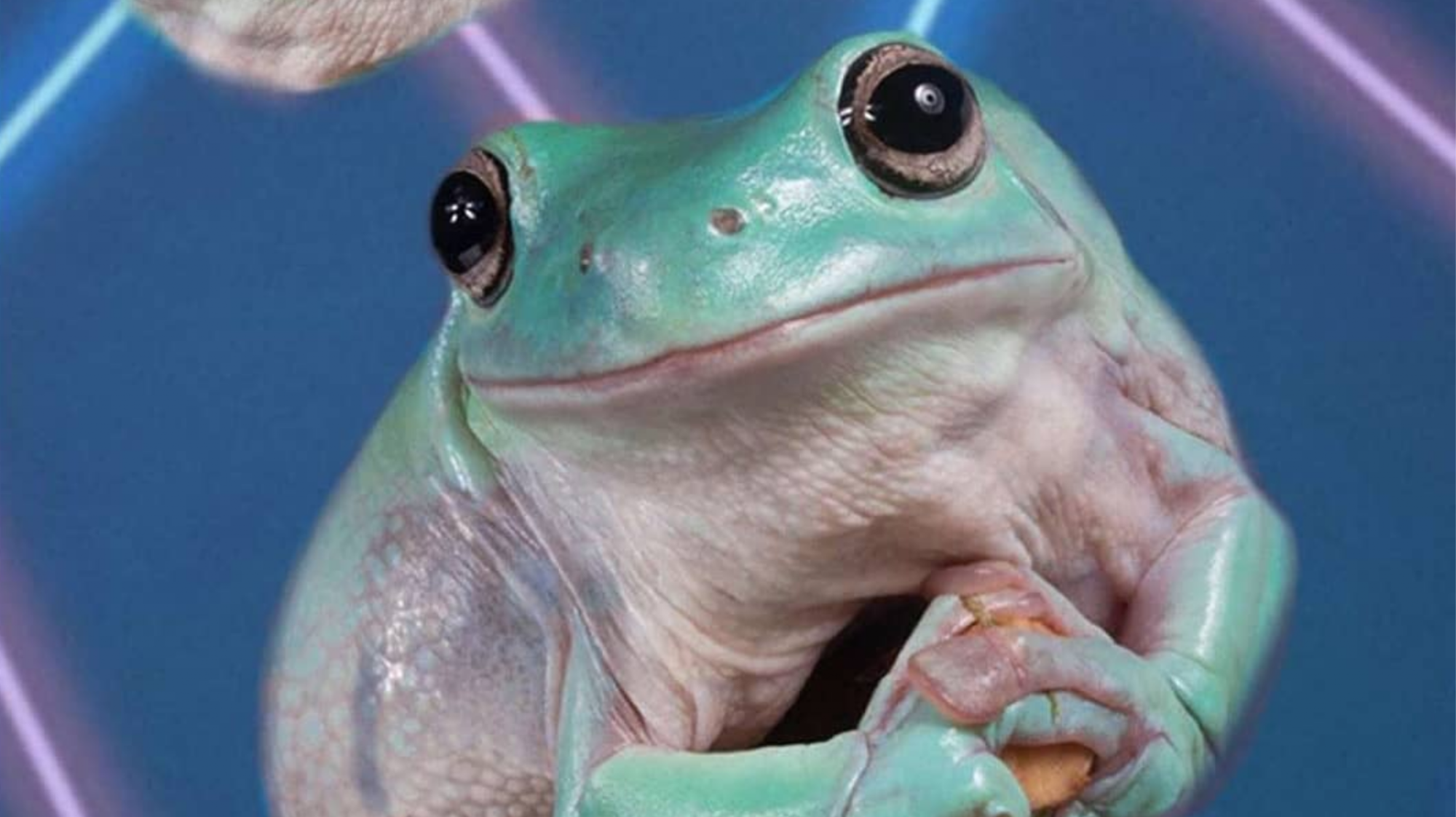Exploring The Confusing Rise Of Frog Posting On Instagram I D
