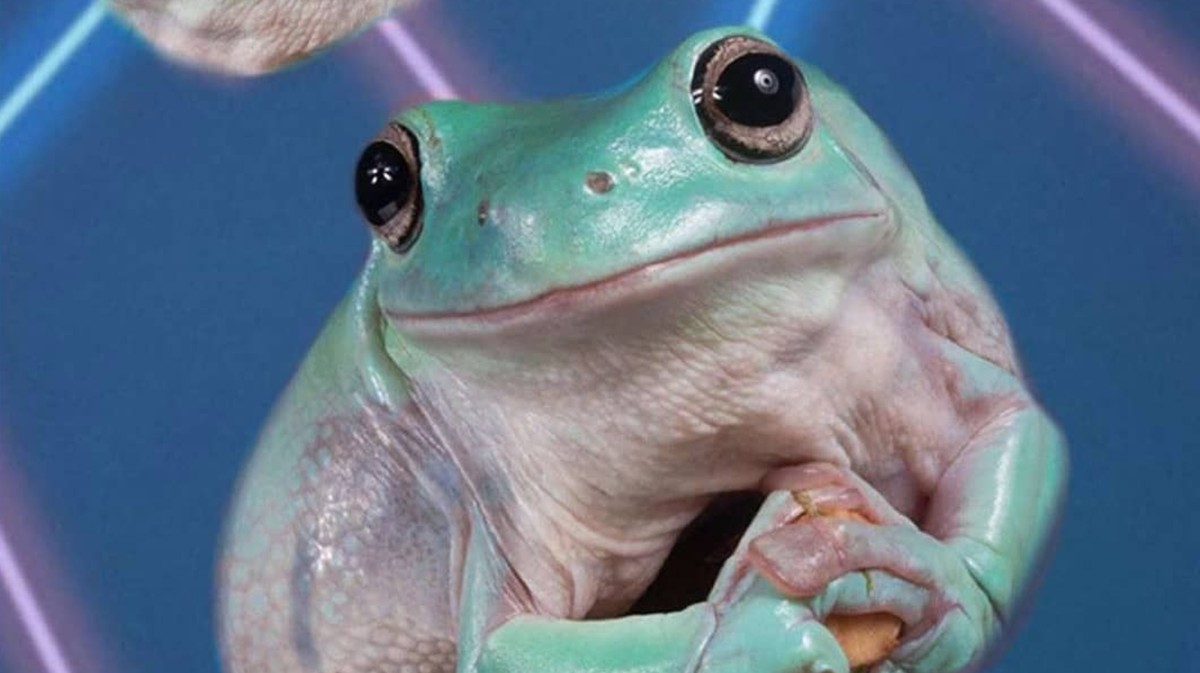 Exploring the confusing rise of frog posting on Instagram