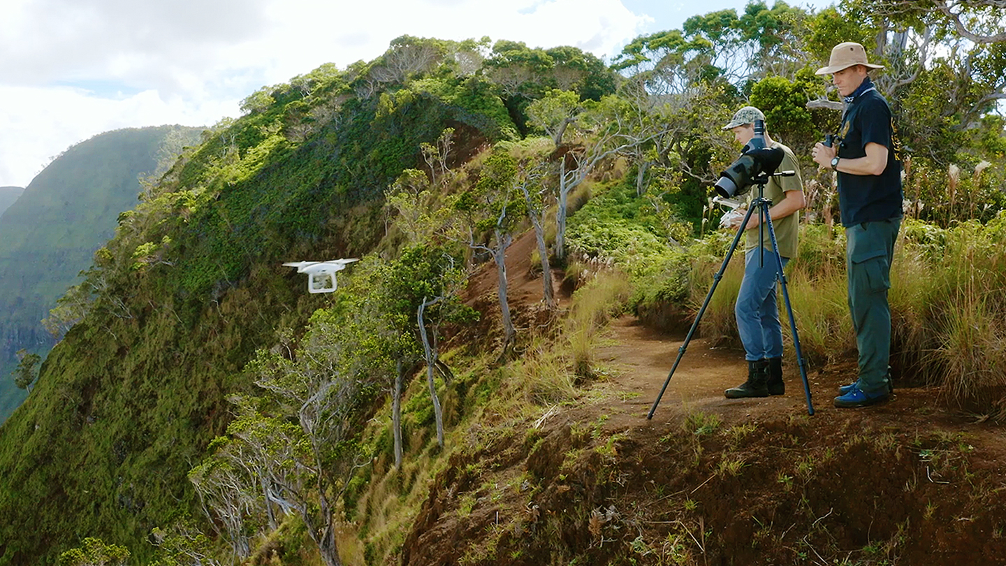 These Botanists Are Searching for Endangered Plants With Drones — Then Scaling Cliffs to Save Them - vice