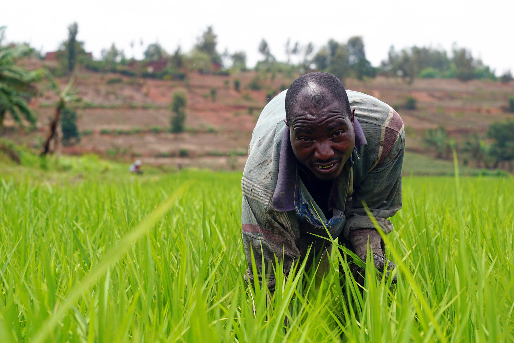 , Malaria Is Devastating Rwanda's Rice Farmers — but the Government Still Won't Commit to This Easy Fix, Saubio Making Wealth